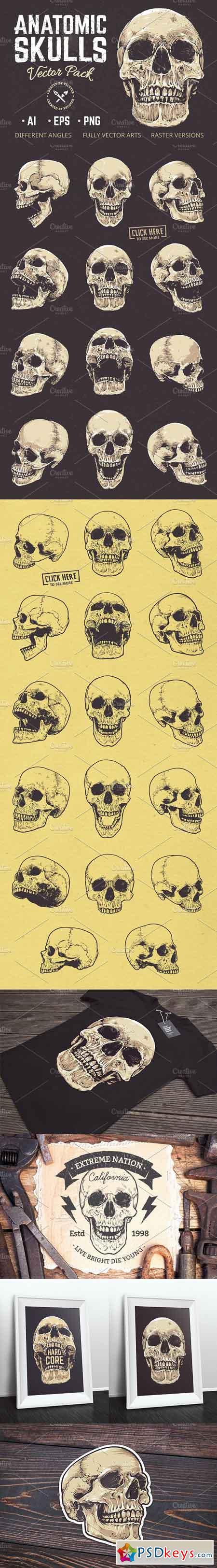 Anatomic Skulls Vector Pack 1181336
