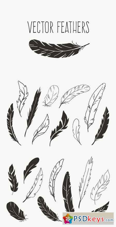 Hand Drawn Vector Feathers