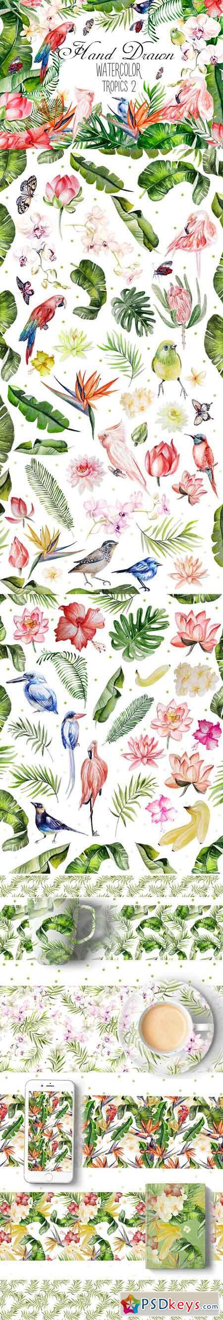 Hand Drawn watercolor TROPICS 2 1590067