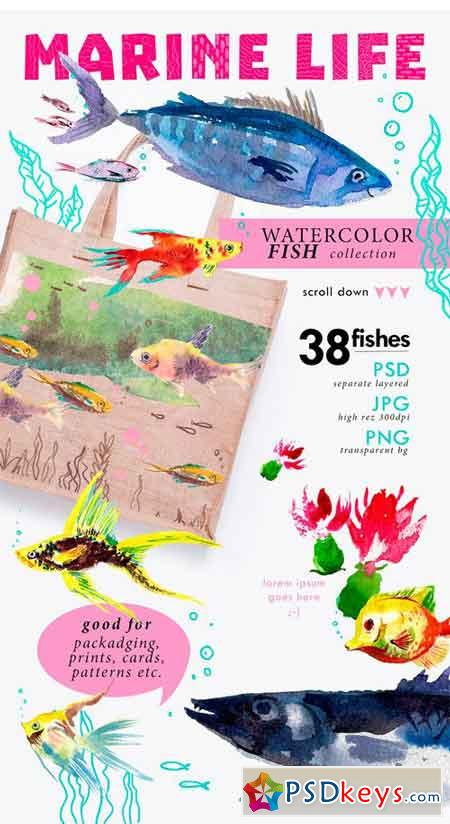38 Watercolor Fishes 1522781