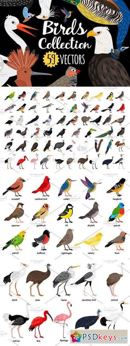 Big set of Different Birds 1326689