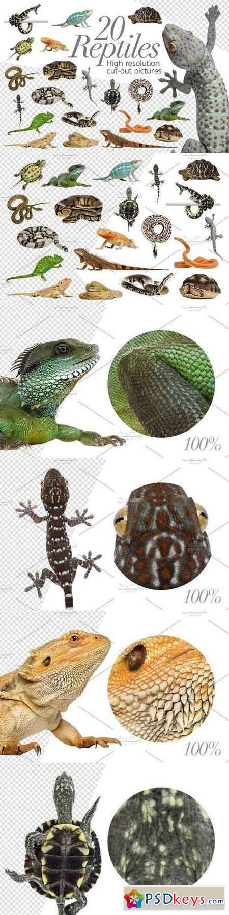 20 Reptiles - Cut-out Pictures 1333269