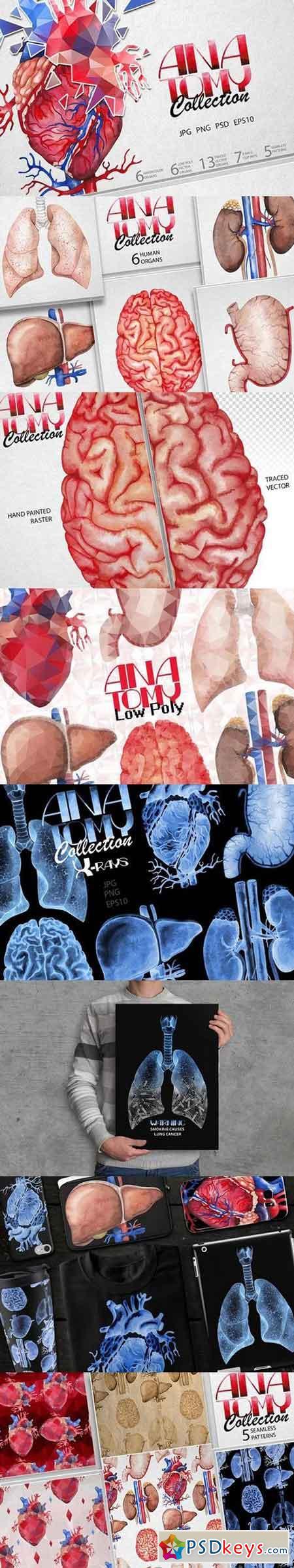 Watercolor human organs 1653607