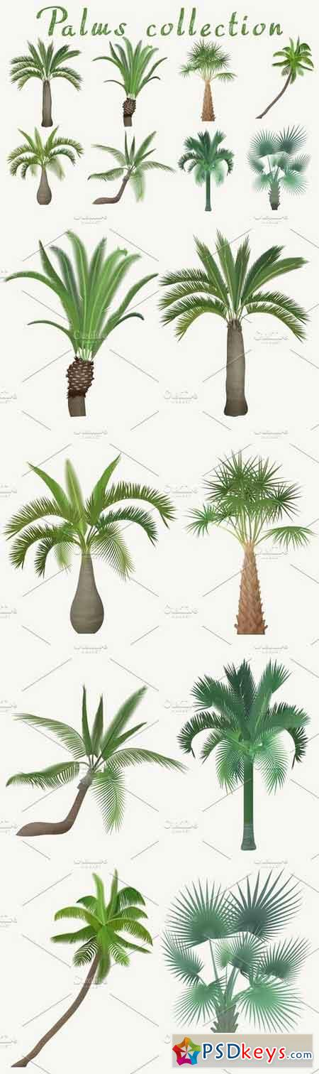 Exotic tropical realistic palm tree 1326593