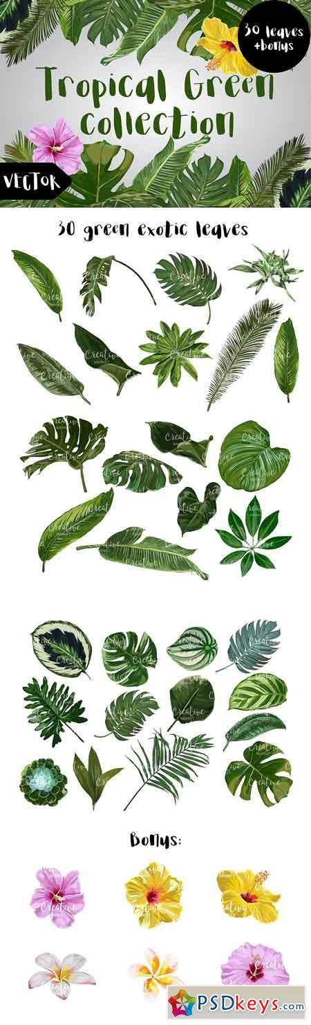 Tropical Green Vector Collection 1615115