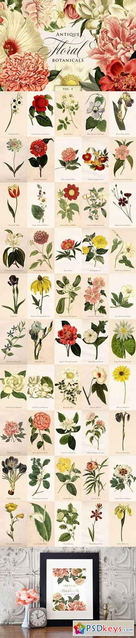 Antique Floral Botanical Graphics 4 1711942