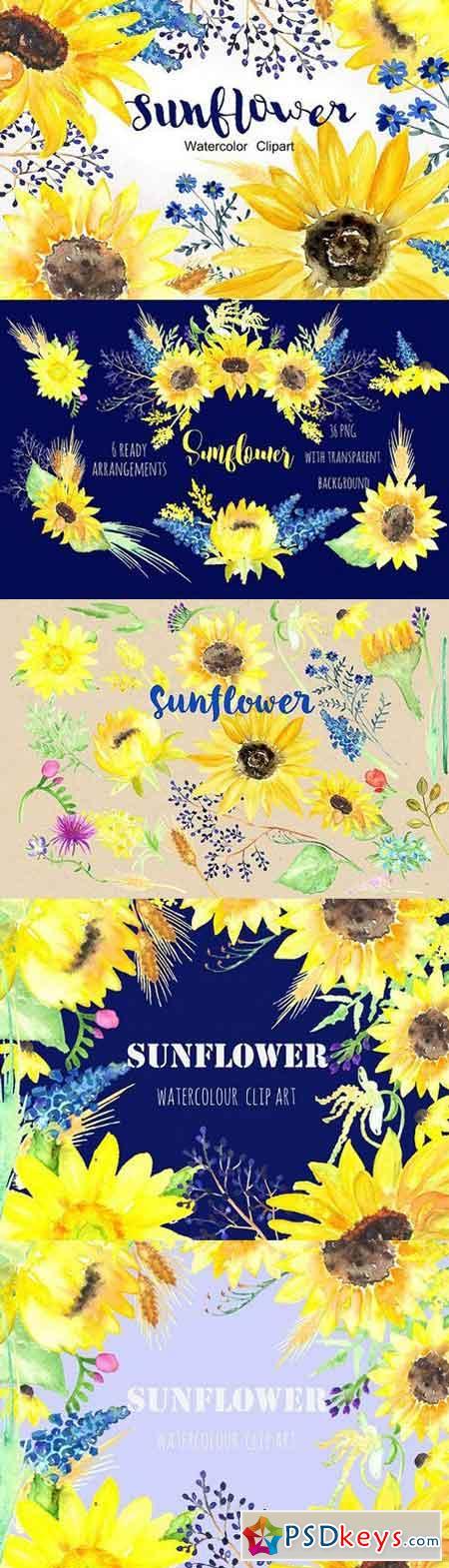Sunflower Watercolor Clip Art 253219