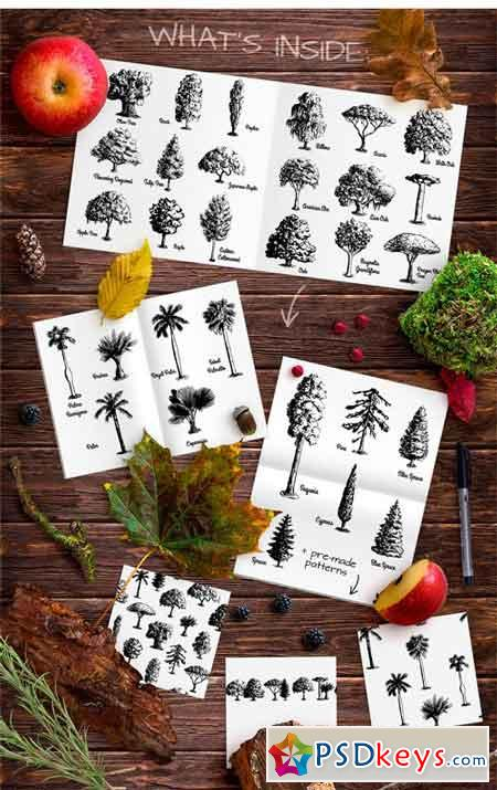 Set of Sketch Trees 1773886