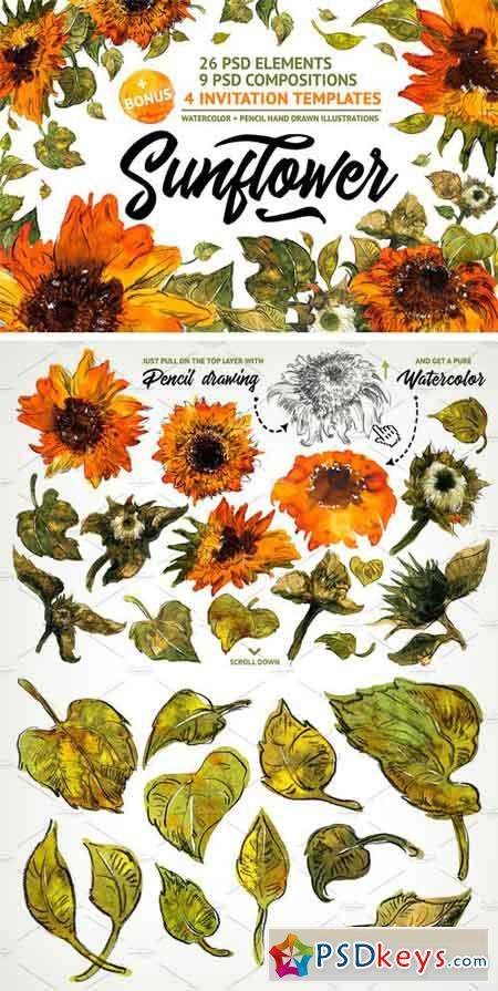 Sunflower 1865970