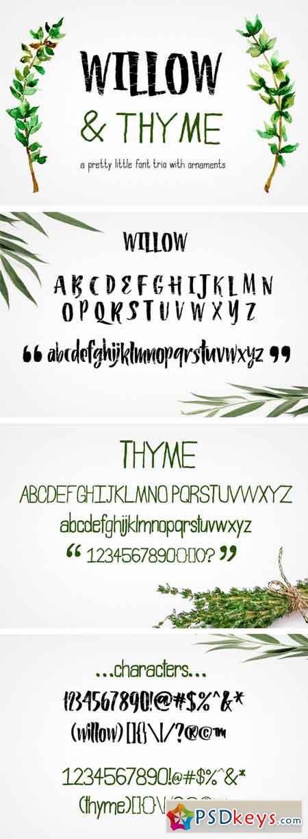 Willow & Thyme with Logo Ornaments 1932272