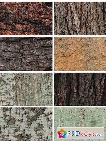 Natural Textures of Wood & Bark 2037514