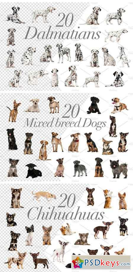 100 Dogs Bundle - Cut-out Pictures 2042414