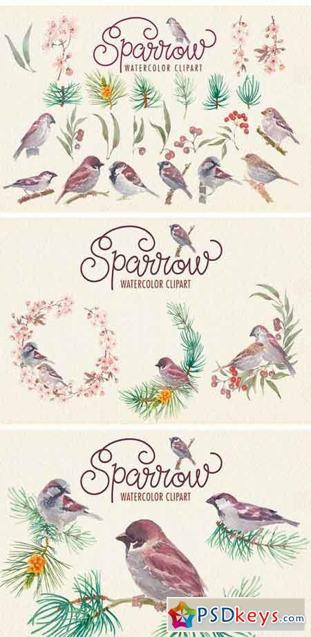 Sparrow Bird Watercolor Clipart 2248520