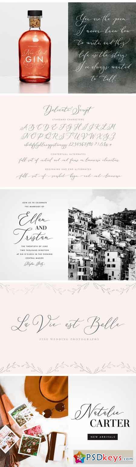Delicate Elegant Script & Ornaments 2269416