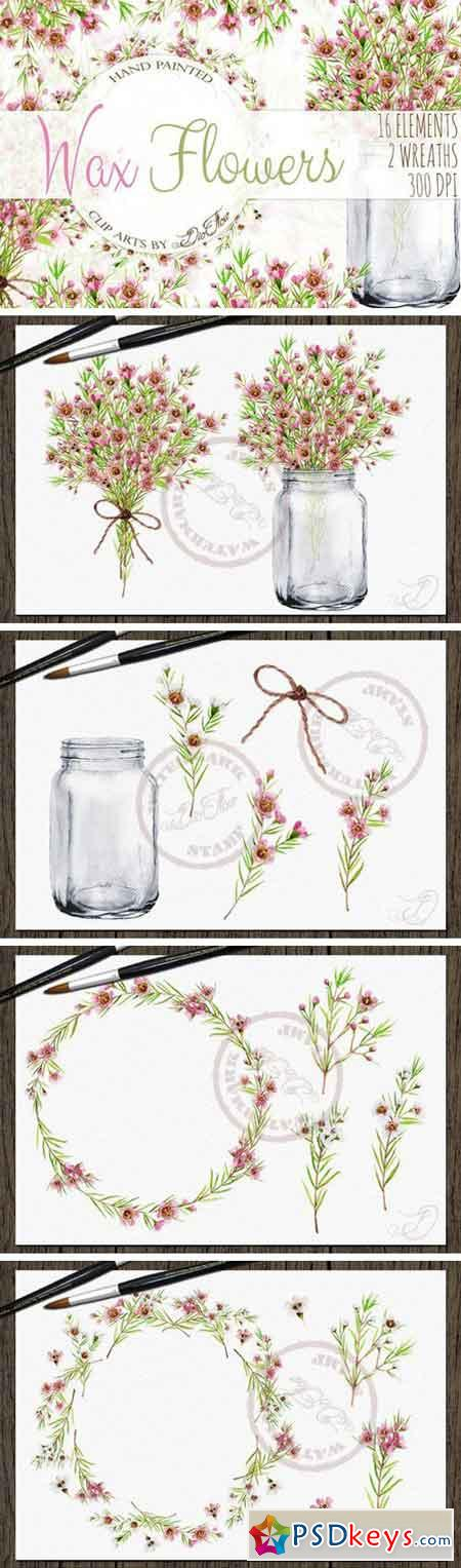 Wax Flowers Watercolor Clip Art 2276856