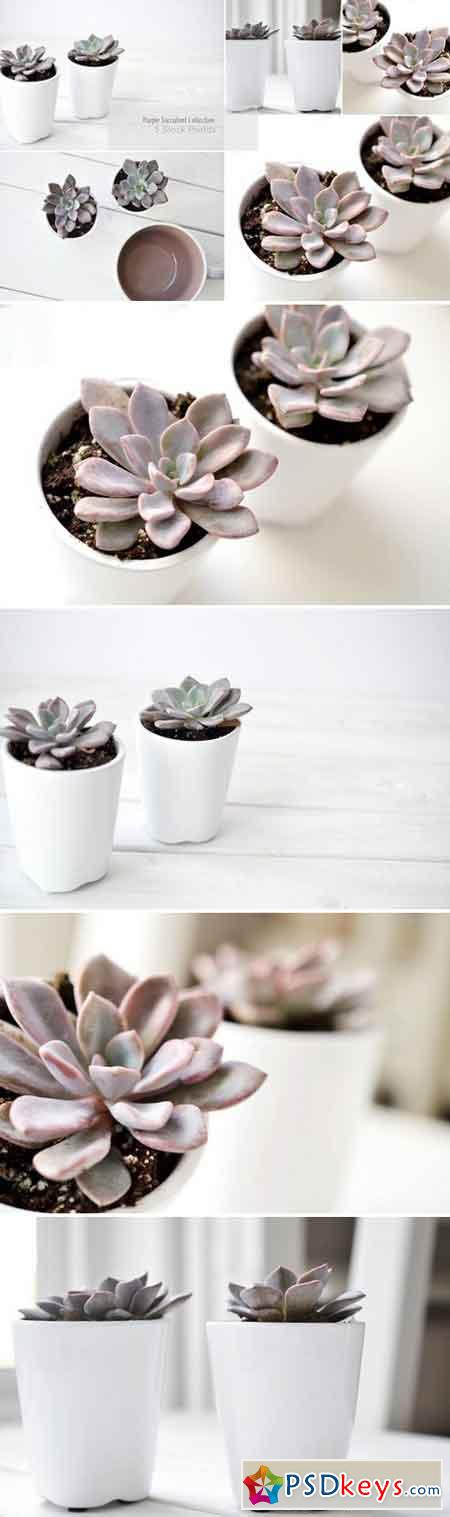 Purple Succulents & Neutrals 1611405