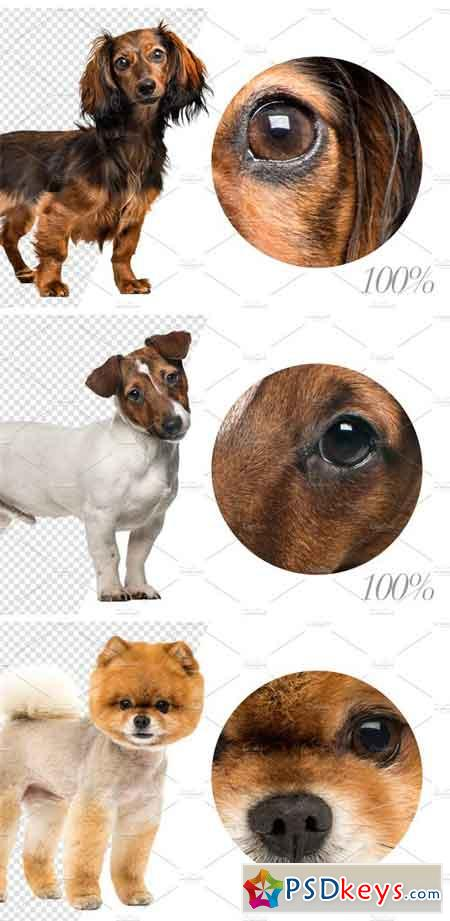 20 Standing Dogs - Cut-out Pictures 2261997