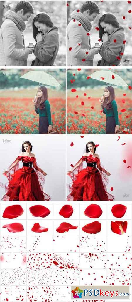 30 Falling Rose Petals Photo Overlay 2283778