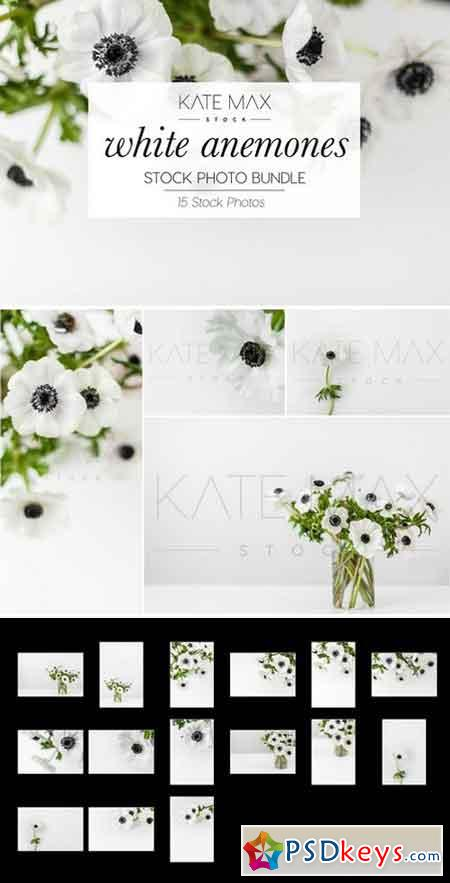 White Anemones Stock Photo Bundle 2315032