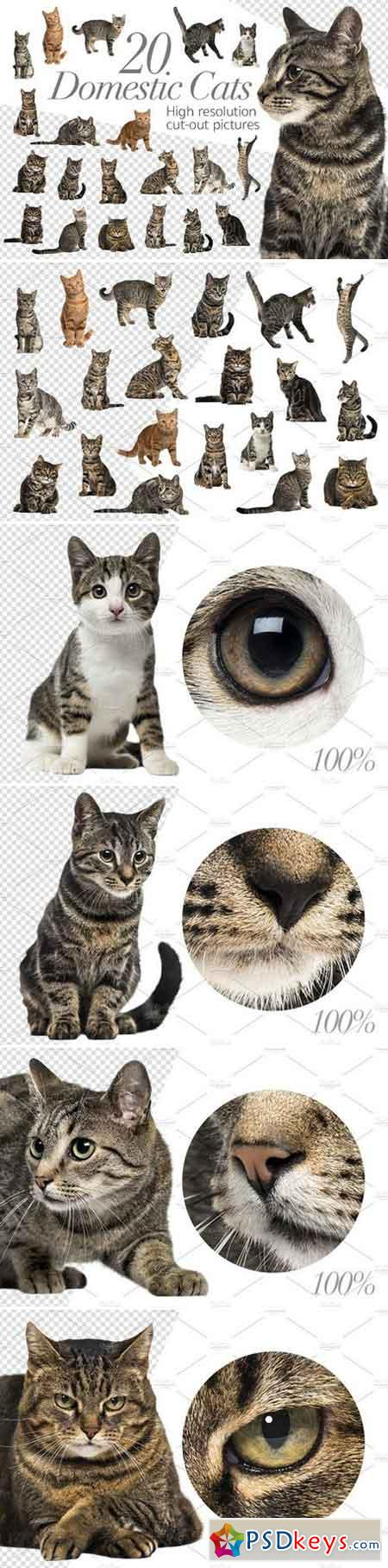 20 Domestic Cats - Cut-out Pictures 2316524