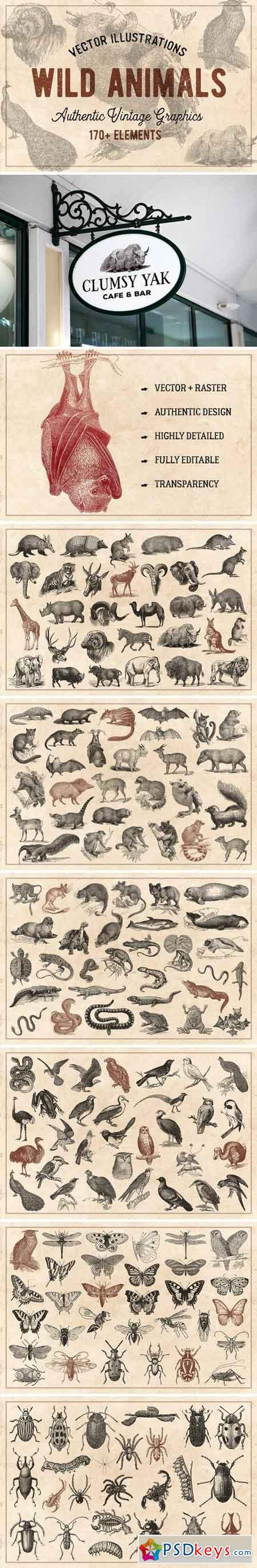 176 Vintage Wild Animals (Vector) 1464581