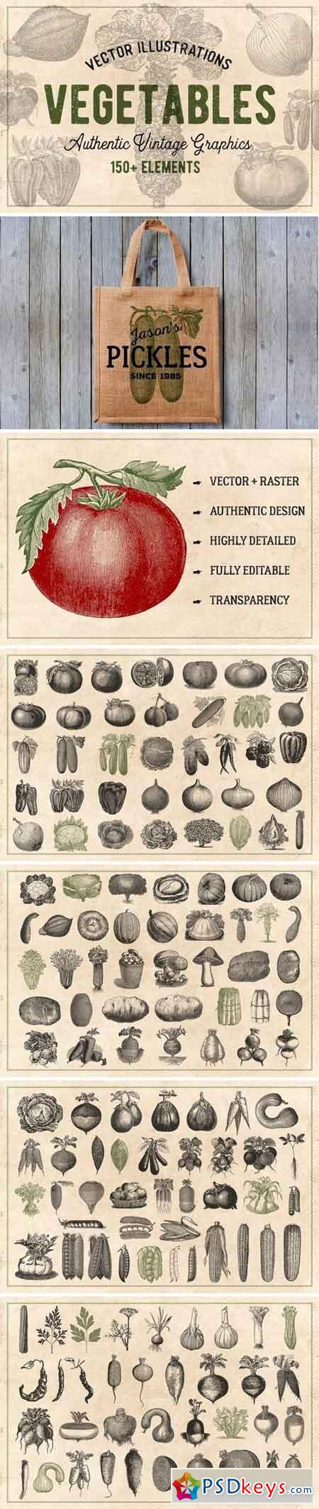 150 Vintage Vegetables (Vector) 1238510