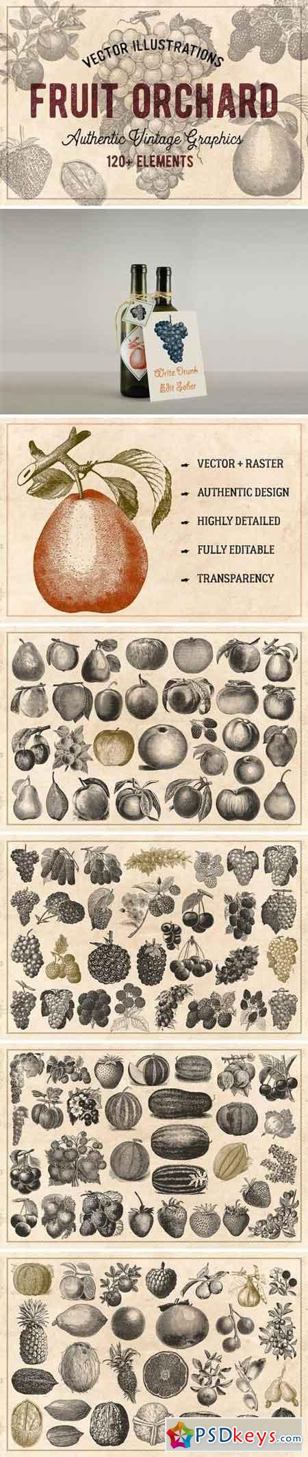 120 Vintage Fruit & Nuts (Vector) 1276326