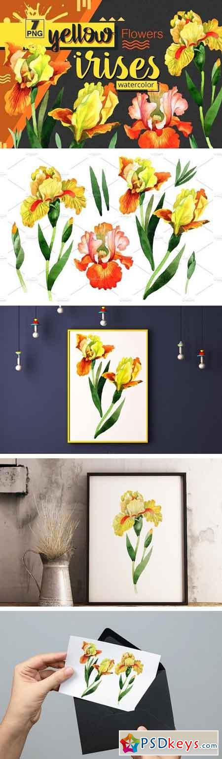 Yellow irises watercolor PNG clipart 1539921