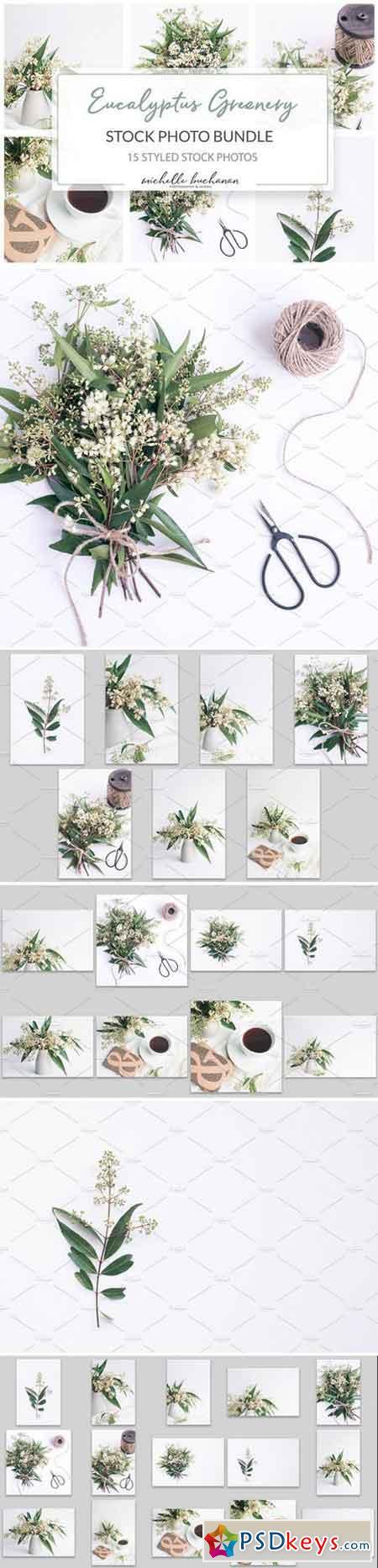 Eucalyptus Greenery Stock Bundle 2356024