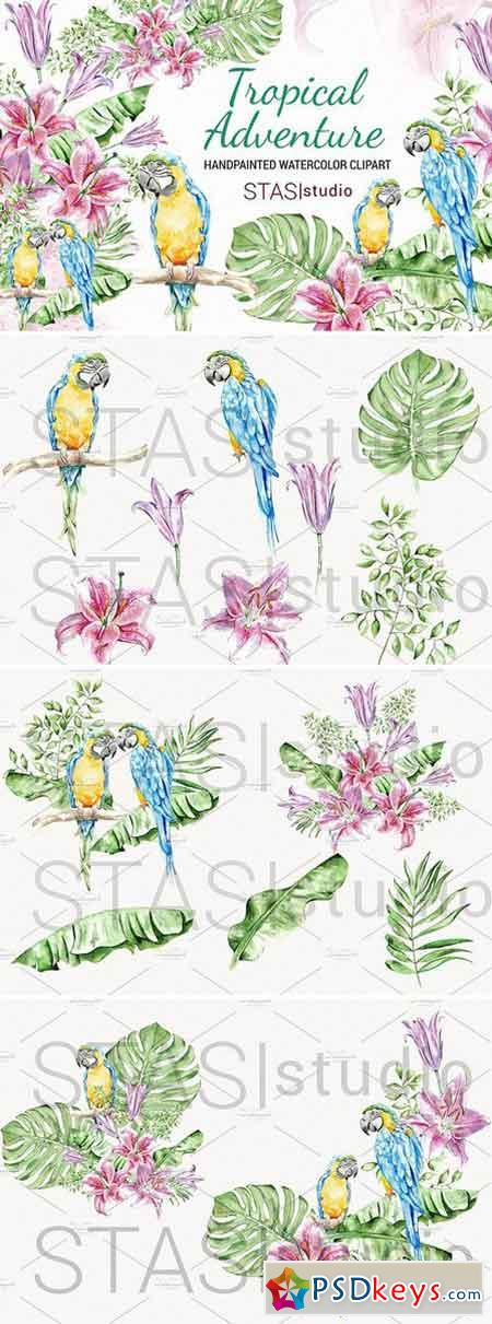 Summer Watercolor Clipart Parrot 1568450