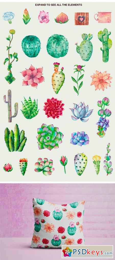Floral Cactus Succulent Collection 2370446