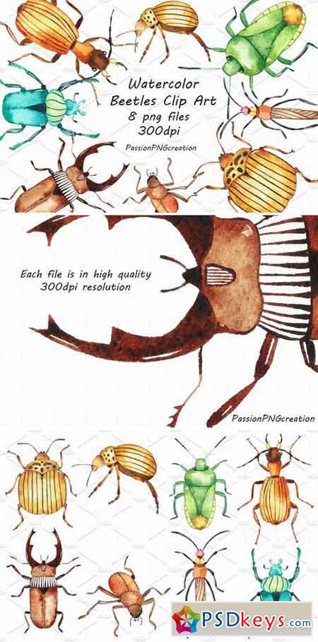 Watercolor beetles clipart 2404991