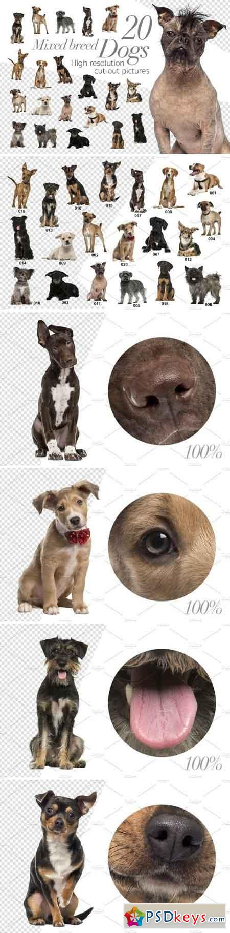 20 Mixed breed Dogs - Cut-out Pics 2029733