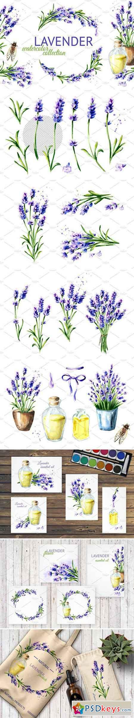 LAVENDER Watercolor collection 2428832