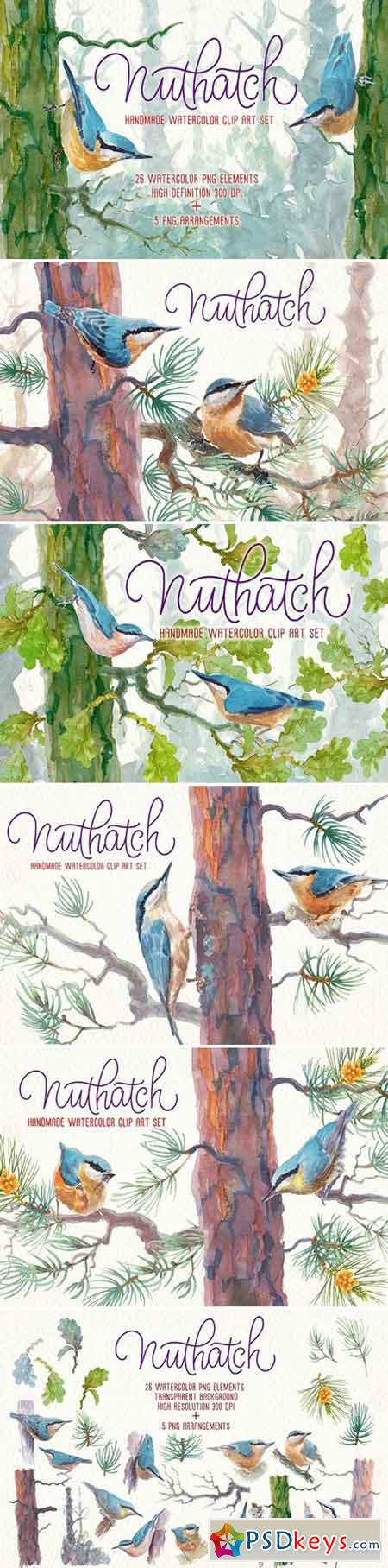Nuthatch watercolor clipart set 2457736