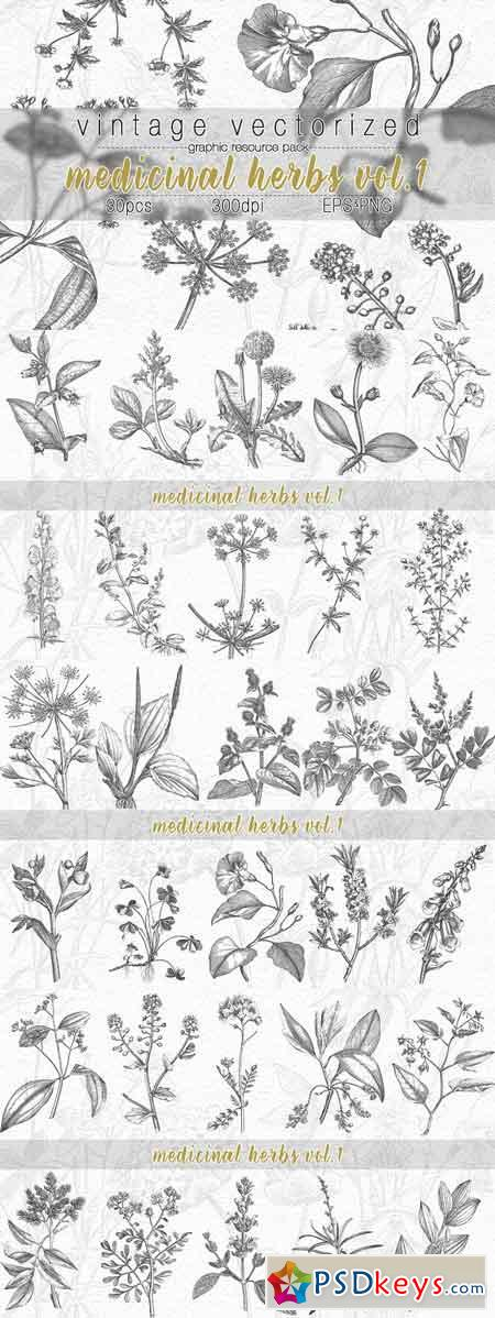 VintageVectorized- Herbs Clipart 2532443
