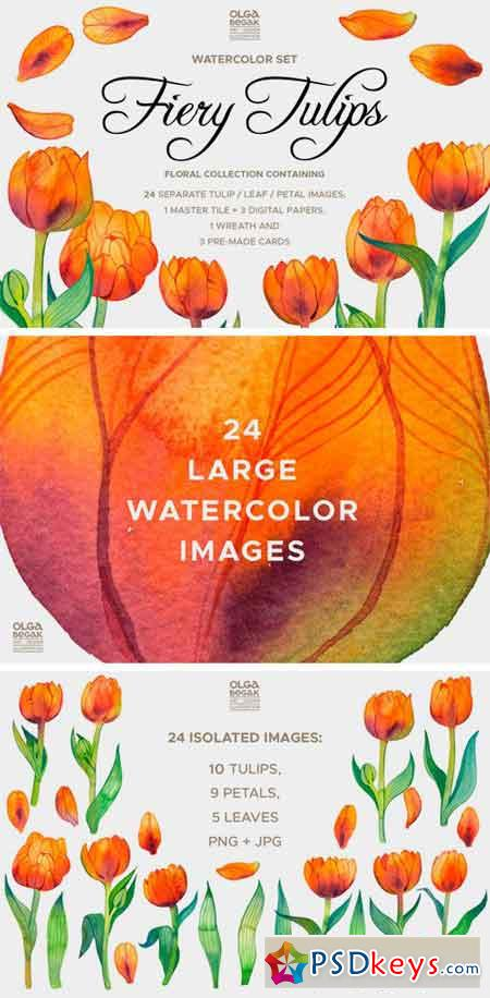 Fiery Tulips Watercolor Collection 2394687