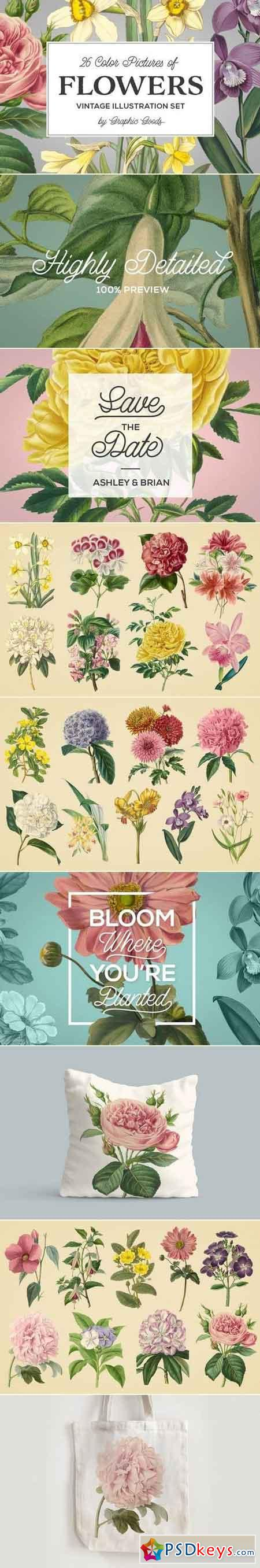 Vintage Illustrations of Flowers