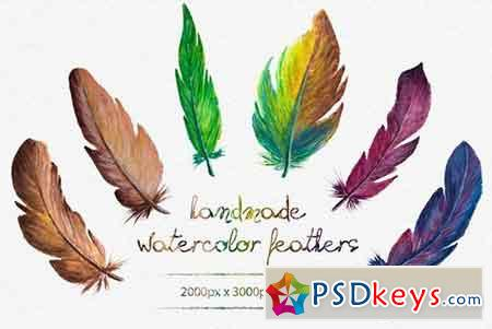 Watercolor Feathers 873887