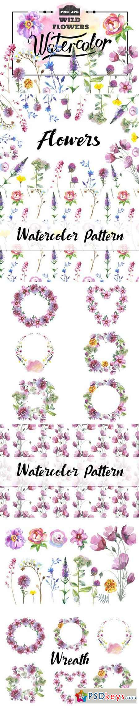 Wild Flowers watercolor PNG set