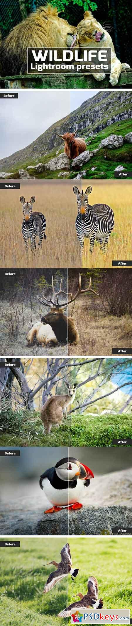 Wildlife Lightroom Presets 2538578