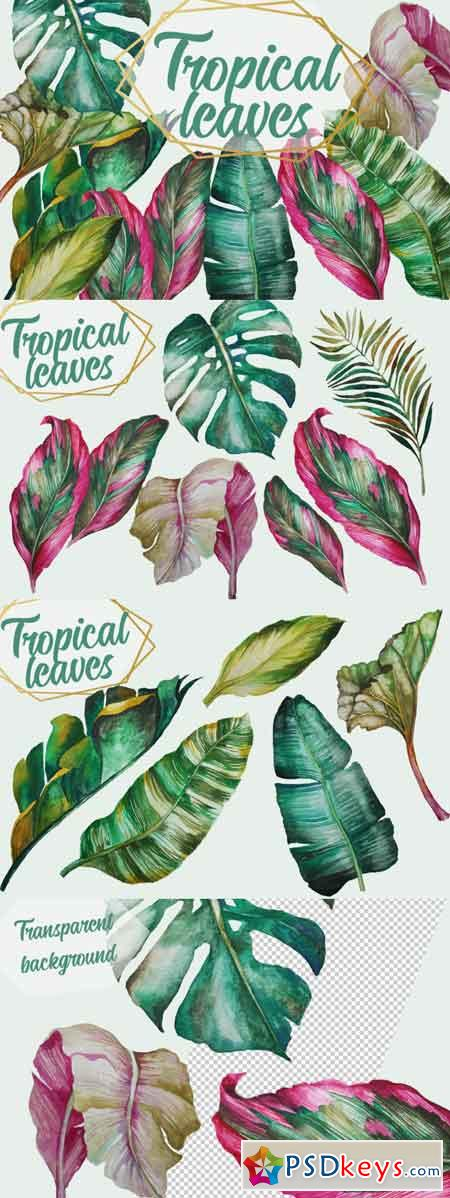 Tropical Greenery, Tropical Leaves 3485998