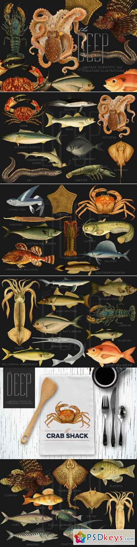 The Deep Sea Creature Illustrations 3483938
