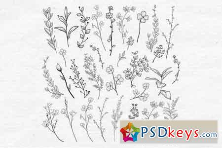 Vector Drawn Herbs, Plants, Flowers