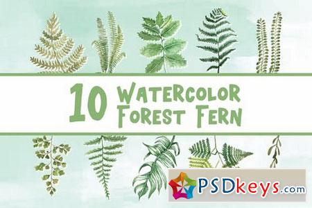 10 Watercolor Forest Fern Illustration Graphics