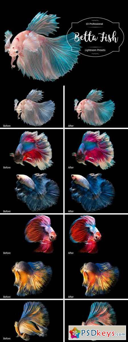 Betta Fish Lr Presets 3488221