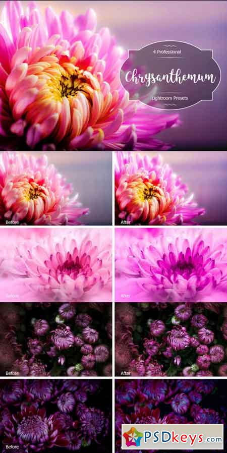 Chrysanthemum Lr Presets 3488254