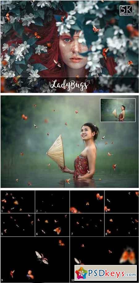 5K Ladybugs Overlays 2057058