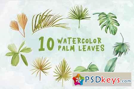 10 Watercolor Palm Leaves Illustration Graphics