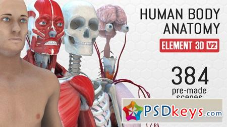 Human Body Anatomy 18254375 After Effects Template